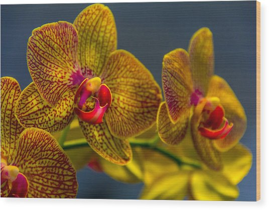 Orchid Color Wood Print