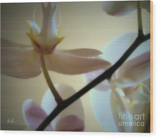 Orchid Composition Wood Print