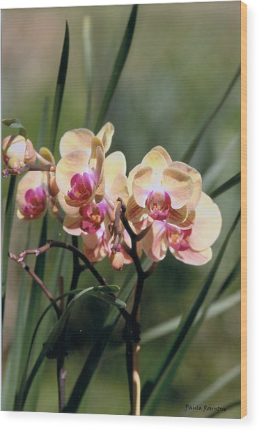 Orchid Dream Wood Print by Paula Rountree Bischoff