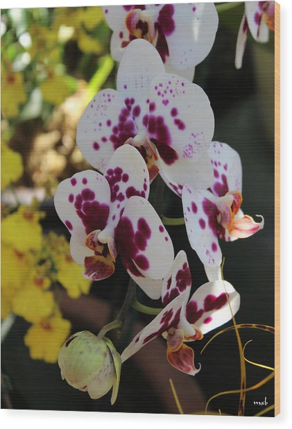 Orchid Four Wood Print by Mark Steven Burhart