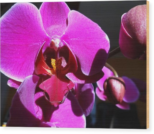 Orchid From My Valentine 3 Wood Print