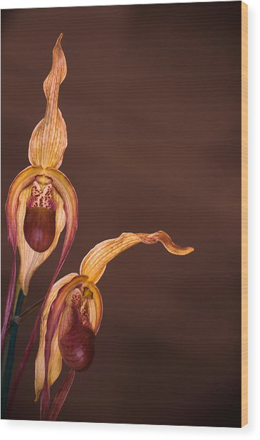 Orchid Greeting Wood Print