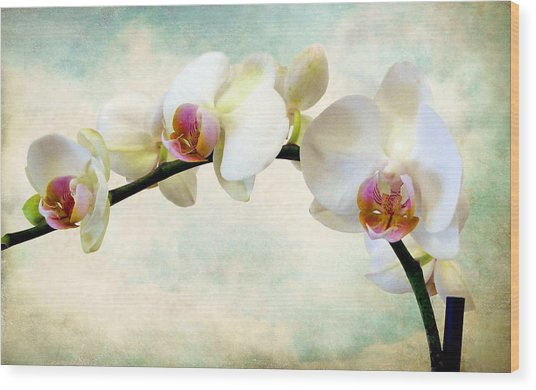 Orchid Heaven Wood Print