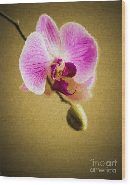 Orchid In Digital Oil Wood Print