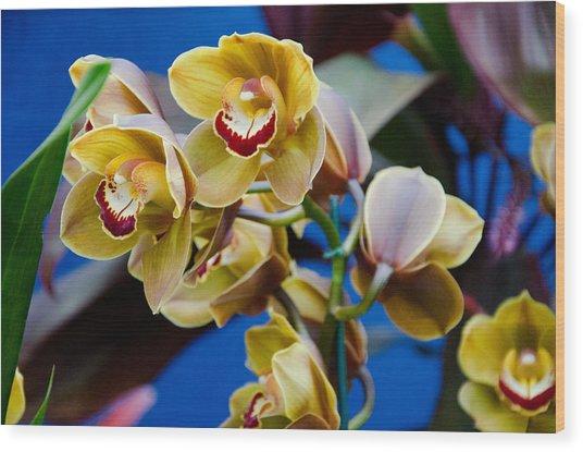 Orchid Pt 1 Wood Print by Heidi  Kleva
