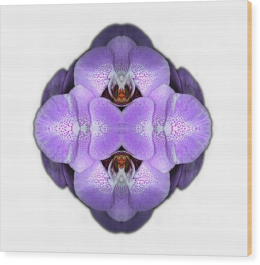 Orchid Wood Print by Silvia Otte