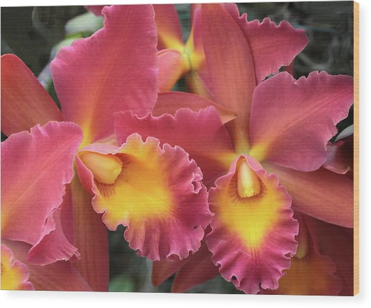 Orchids Ablaze Wood Print