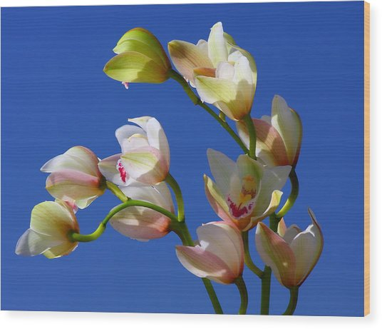Orchids Against A Blue Sky Wood Print