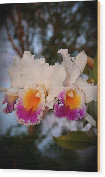 Orchid Elsie Sloan Wood Print