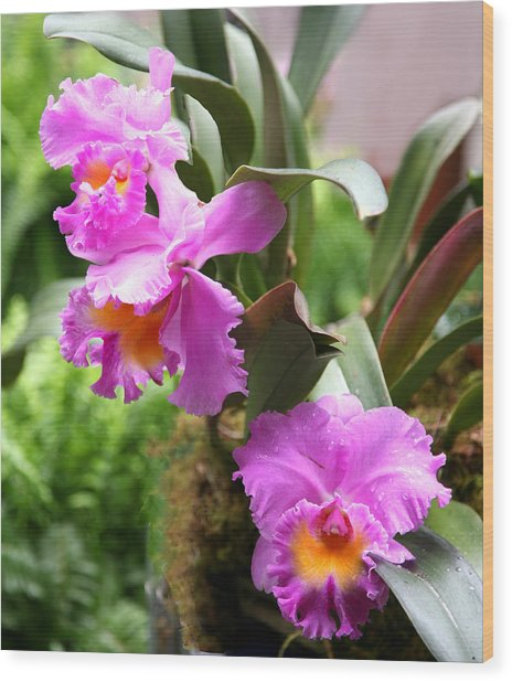 Orchids At The Washington Botanical Wood Print by Carol Kinkead