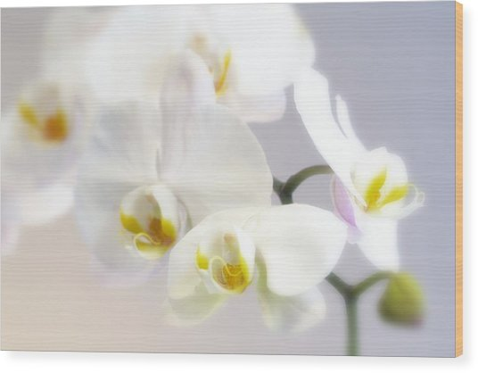 Orchids In The Mist Wood Print