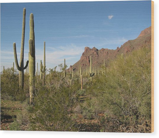 Organ Pipe Np Wood Print