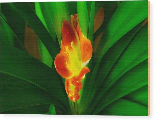 Organic Glowing Wood Print by Daniel Daniel