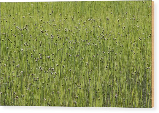Organic Green Grass Backround Wood Print