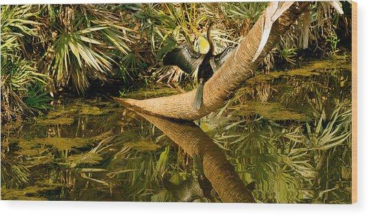 Oriental Darter Anhinga Melanogaster Wood Print