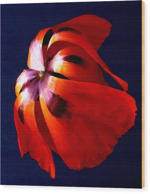 Oriental Poppy I Wood Print