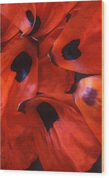 Oriental Poppy IIi Wood Print