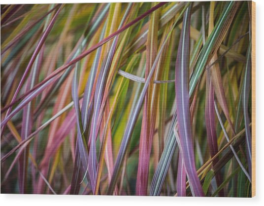 Ornamental Grass Wood Print