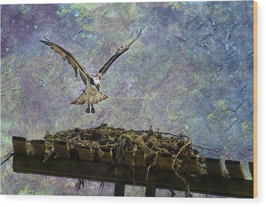 Osprey-coming Home Wood Print