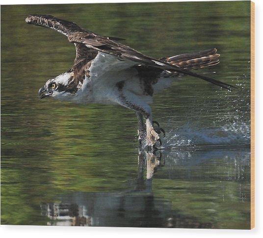 Osprey Hunter Wood Print by Kenneth Haley