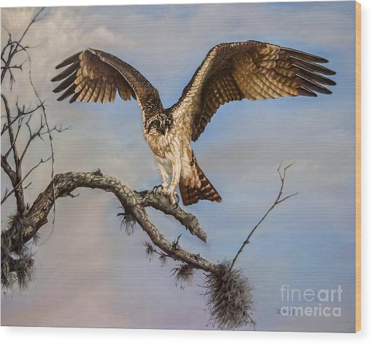 Osprey On The Branch Wood Print
