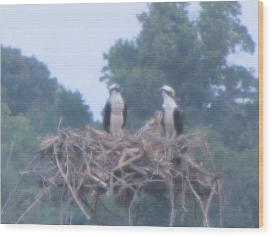 Osprey's Chatting On The Chesapeake Bay Wood Print by Debbie Nester