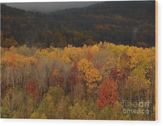 Otter Creek Road Wood Print