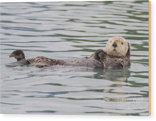 Otterly Adorable Wood Print