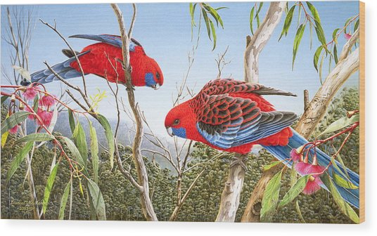 Our Beautiful Home - Crimson Rosellas Wood Print