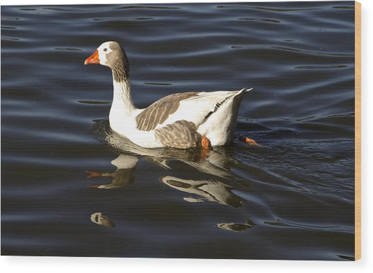 A Goose Out For A Swim Wood Print