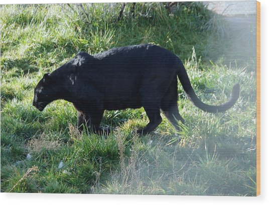 Out Of Africa  Black Panther Wood Print