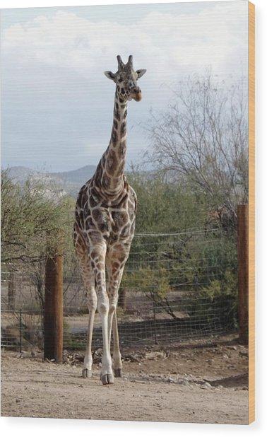 Out Of Africa  Giraffe 1 Wood Print