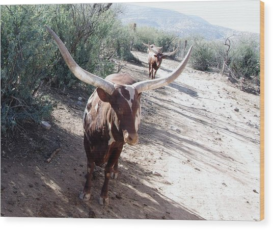 Out Of Africa  Long Horns Wood Print