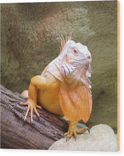 Out Of Africa Orange Lizard 1 Wood Print