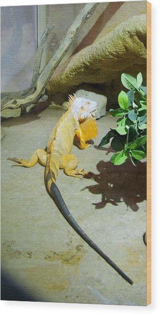 Out Of Africa Orange Lizard 2  Wood Print