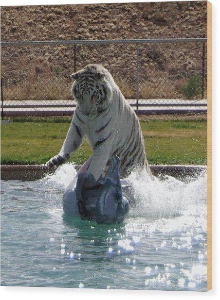 Out Of Africa Tiger Splash 1 Wood Print