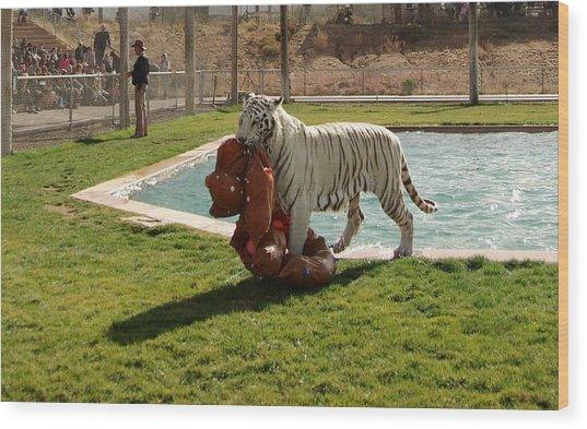 Out Of Africa Tiger Splash 2 Wood Print