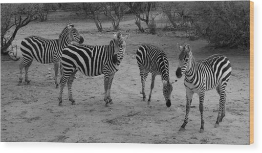 Out Of Africa  Zebras Wood Print