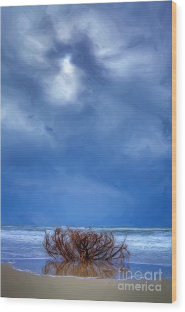 Outer Banks - Driftwood Bush On Beach In Surf II Wood Print by Dan Carmichael