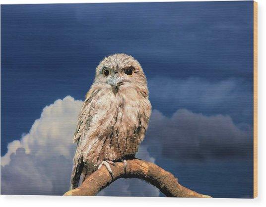 Owl At Dusk Wood Print