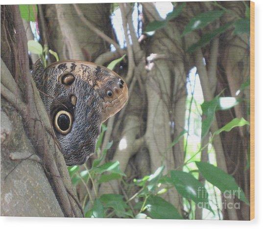 Owl Butterfly In Hiding Wood Print
