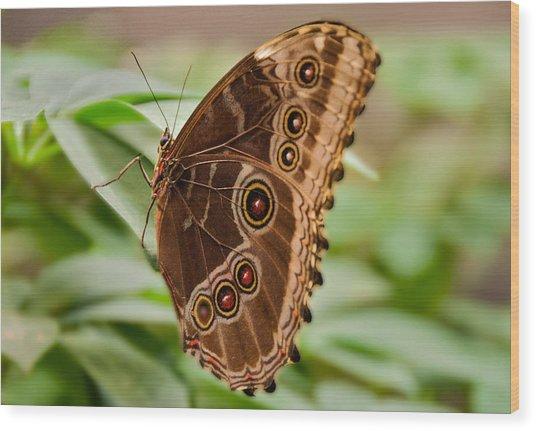 Owl Butterfly Wood Print by Mae Wertz