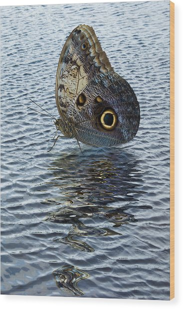Owl Butterfly On Water Wood Print