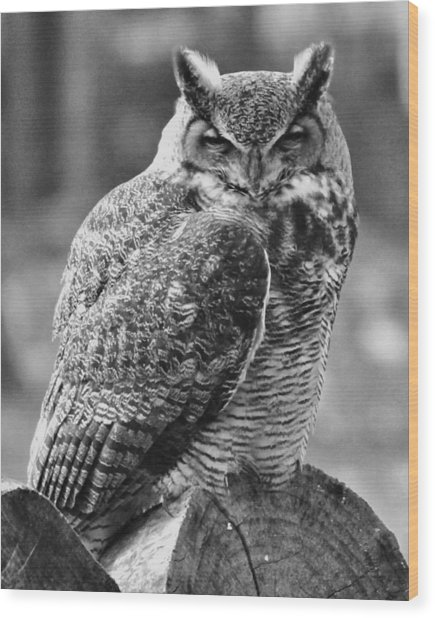 Owl In Black And White Wood Print