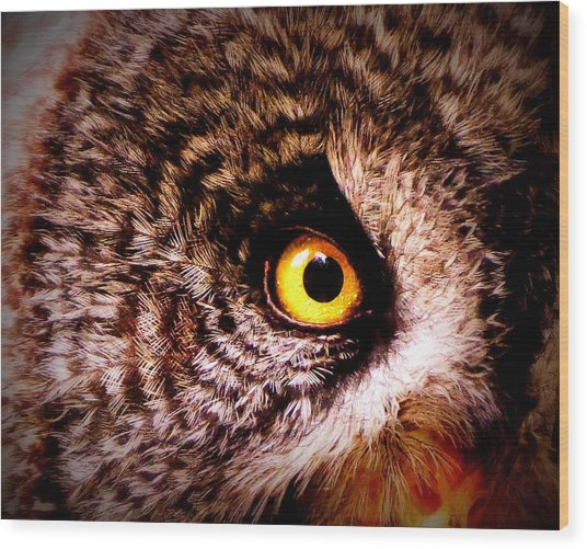 Owl's Eye Wood Print