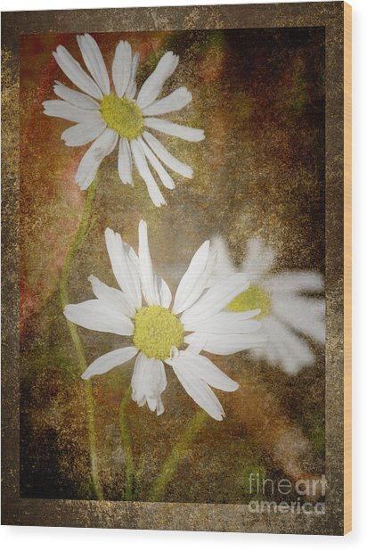 Ox Eye Dasies Wood Print