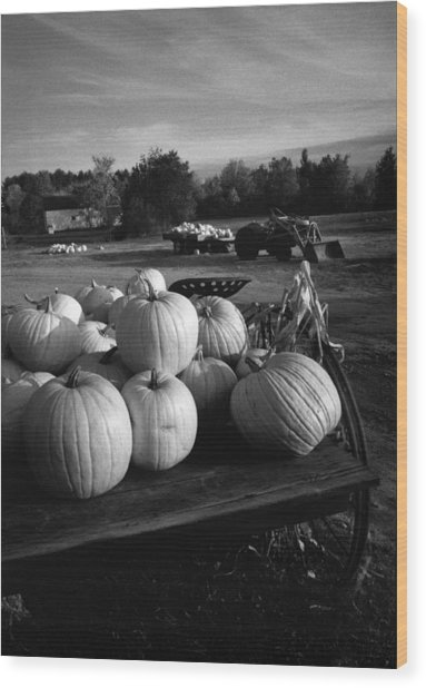 Oxford Pumpkins Bw Wood Print
