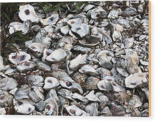 Oyster Shells Wood Print by John Rizzuto