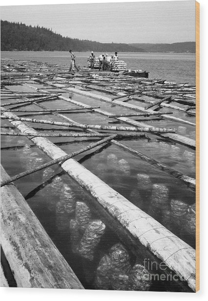 Oystering Industry Wood Print