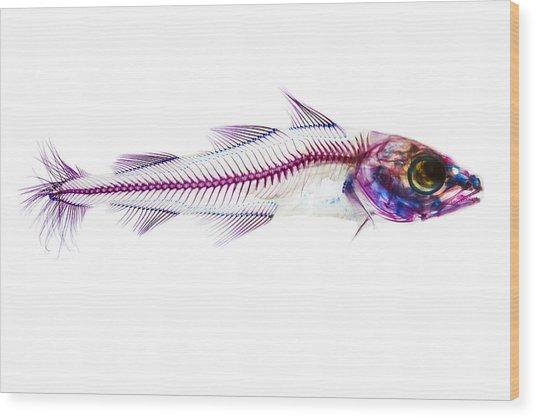 Pacific Cod Wood Print